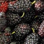 Calories in Mulberries