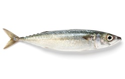 Spanish Mackerel Calories