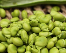 Calories in Broad Beans
