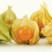Physalis Calories
