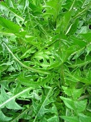 Calories in Dandelion Greens, Dandelion Greens Calories per Serving