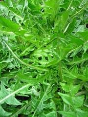 Calories in Dandelion Greens, Dandelion Greens Calories per Serving