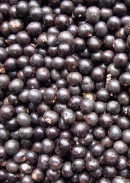 Acai Berry is on The Fat Burning Foods List