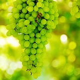 Grape Calories