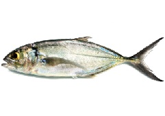 King Mackerel Calories