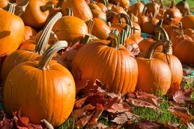 Pumpkin Calories