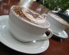 Starbucks Nutrition Information for Drinks