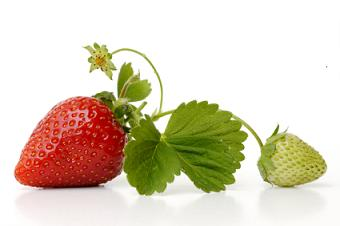 Strawberry Nutrition Facts, Health Benefits of Strawberries