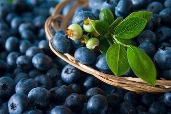 Blueberry Nutrition Facts, Health Benefits of Blueberries