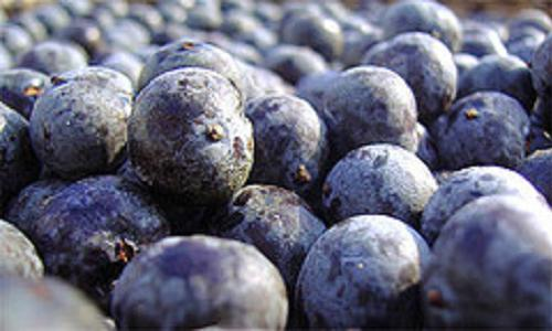 Acai Weight Loss