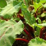 Beet Greens Calories