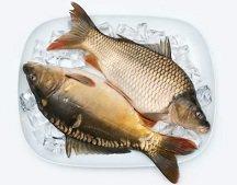 Calories in Carp Fish, Carp Nutrition Facts