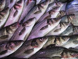 Fish Calories