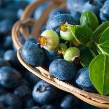 Low Glycemic Food List