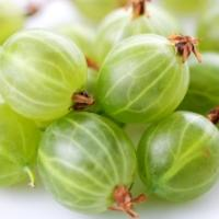 Calories in Gooseberries