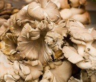Calories in Maitake Mushrooms, Nutrition and Benefits