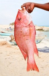 Calories in Snapper Fish, Snapper Nutrition Facts